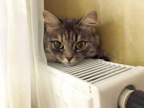 Отопление в Новосибирске отключать не планируют