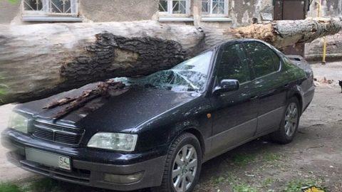 Дерево упало на машину в Новосибирске