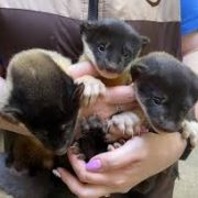 Детеныши харз родились в Новосибирском зоопарке