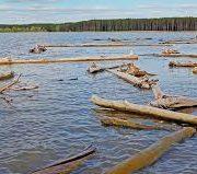 Новосибирская ГЭС начала сбрасывать древесину в Обь