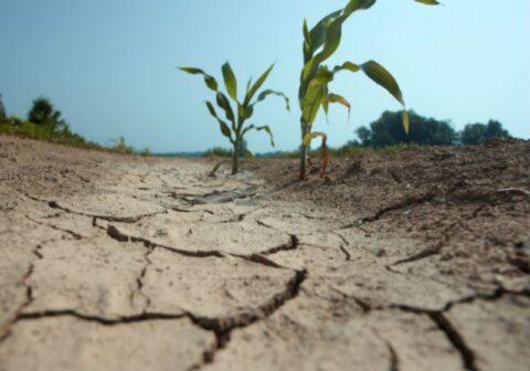 ЧС из-за засухи введен уже в 11 районах Новосибирской области