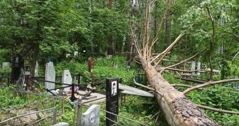 Деревья разбили памятники на кладбище Новосибирска