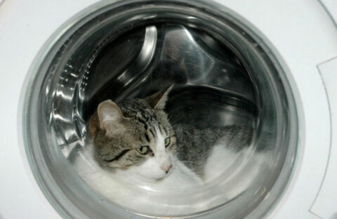 """Кошка выжила после """"стирки"""" в машинке в Новосибирске"""