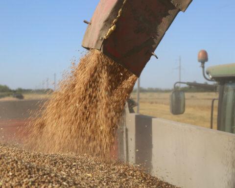 Большое количества зерна нелегально увозят из Новосибирской области