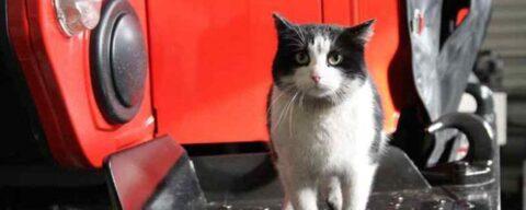 Пожарного кота Гидранта в Новосибирске укусил клещ