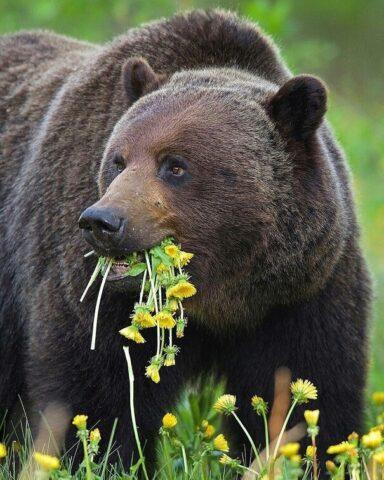 Новосибирский зоопарк отмечает день рождения