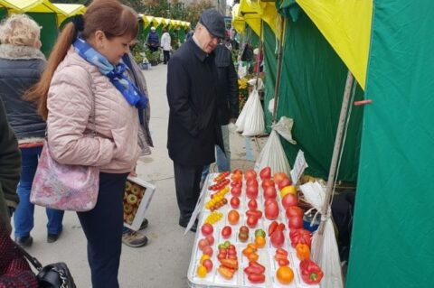 На ярмарке в Новосибирске продавали черные перцы и фиолетовые томаты