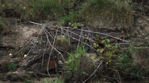 Останки старой лодки нашли на берегу Оби