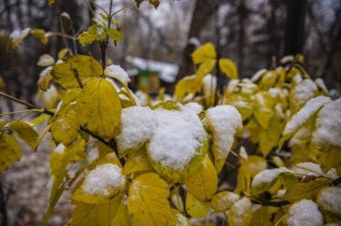 Заморозки идут в Новосибирск