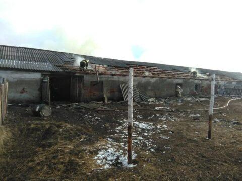 В Чановском районе сгорели поросята и телята