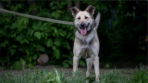 В Новосибирске ищут новый дом собаке без лапы