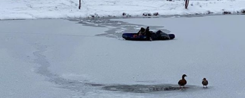 Депутат Новосибирского горсовета спасает уток на надувном матрасе
