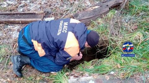Помогли щенку выбраться из глубокой ямы новосибирские спасатели