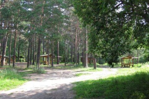 Против застройки Заельцовского парка в Новосибирске выступают депутаты