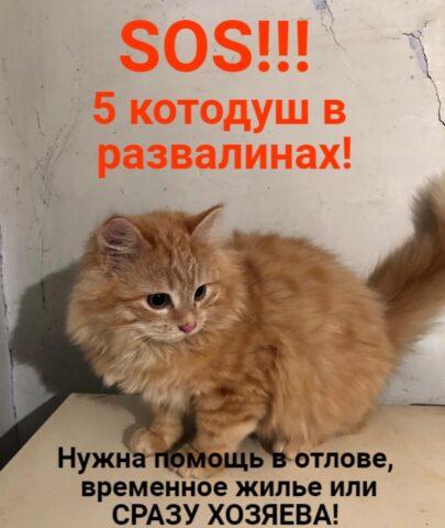 Брошенных кошек спасают новосибирцы из рухнувшего дома