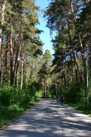 Заельцовскому бору хотят присвоить статус регионального парка Новосибирска