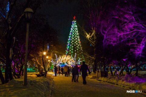 Власти Новосибирска раскрыли цену главной ели на площади Ленина