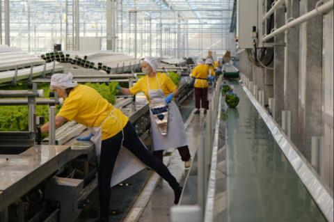В Новосибирской области открыли новый тепличный комплекс