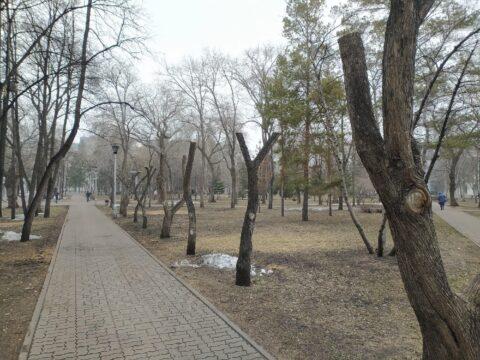 В Первомайском сквере Новосибирска обкромсали деревья