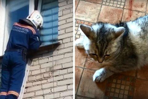 Кошке в Новосибирске потребовалась помощь спасателей