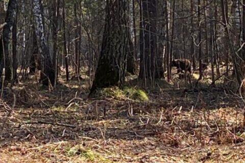Новосибирцы встретили в лесу медведя