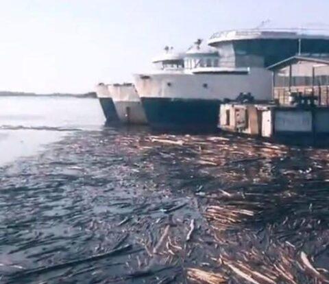 Необычное «деревянное море» обнаружили под Новосибирском