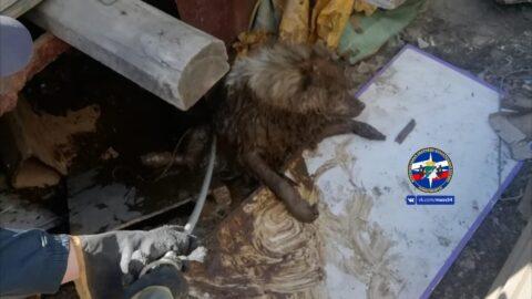 Из выгребной ямы спасли собаку в Новосибирске