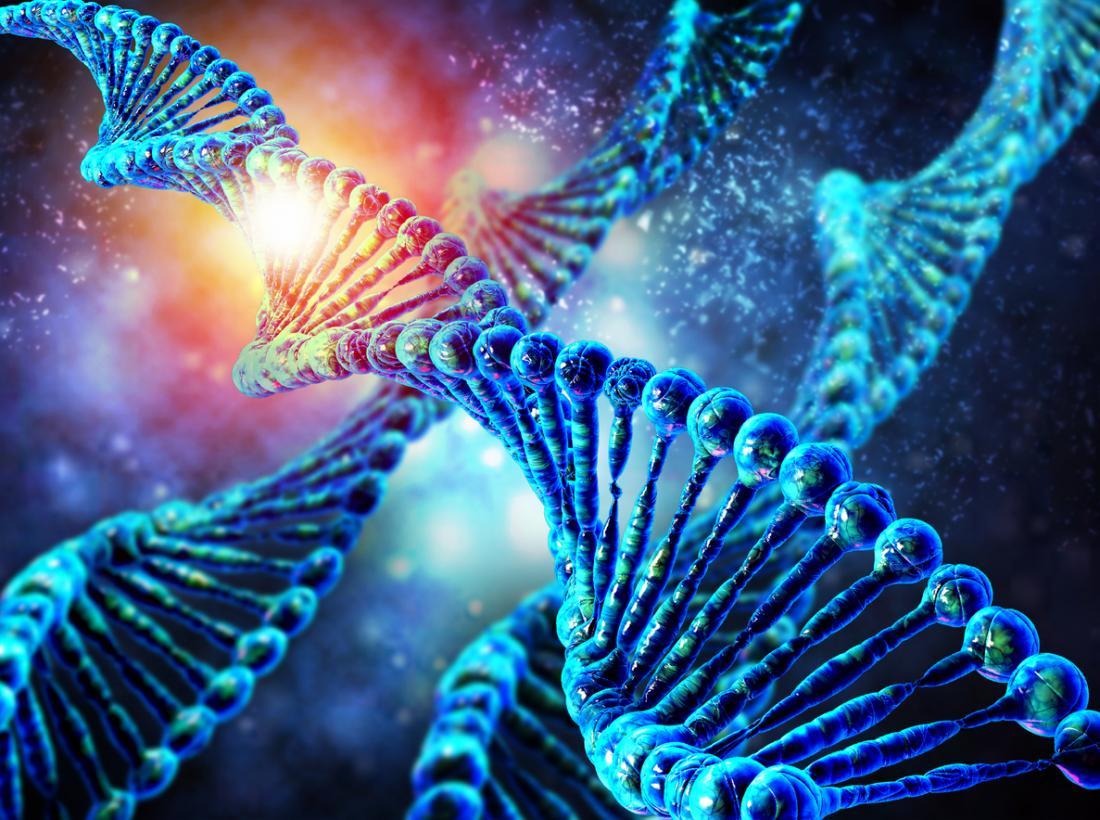 Выявлены редкие генетические варианты, связанные с ожирением и гипертонией