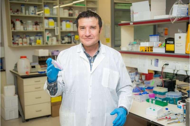 Исследователи увеличивают продолжительность жизни мышей в среднем на 30%