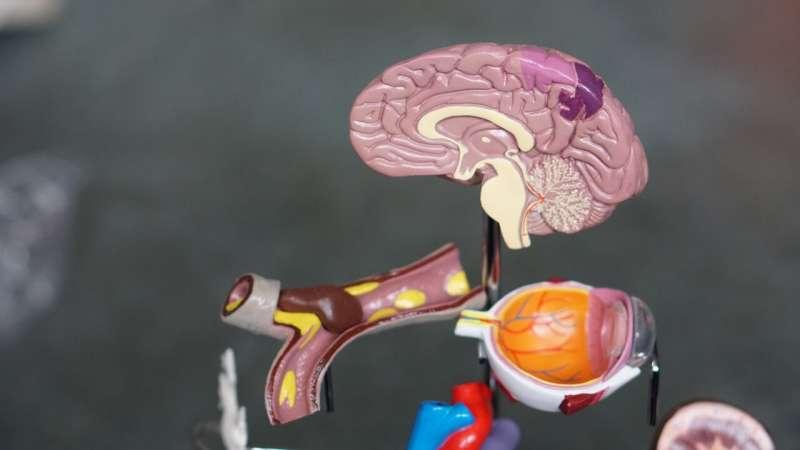 Крупномасштабное исследование эпигенетики мозга позволяет по-новому взглянуть на деменцию