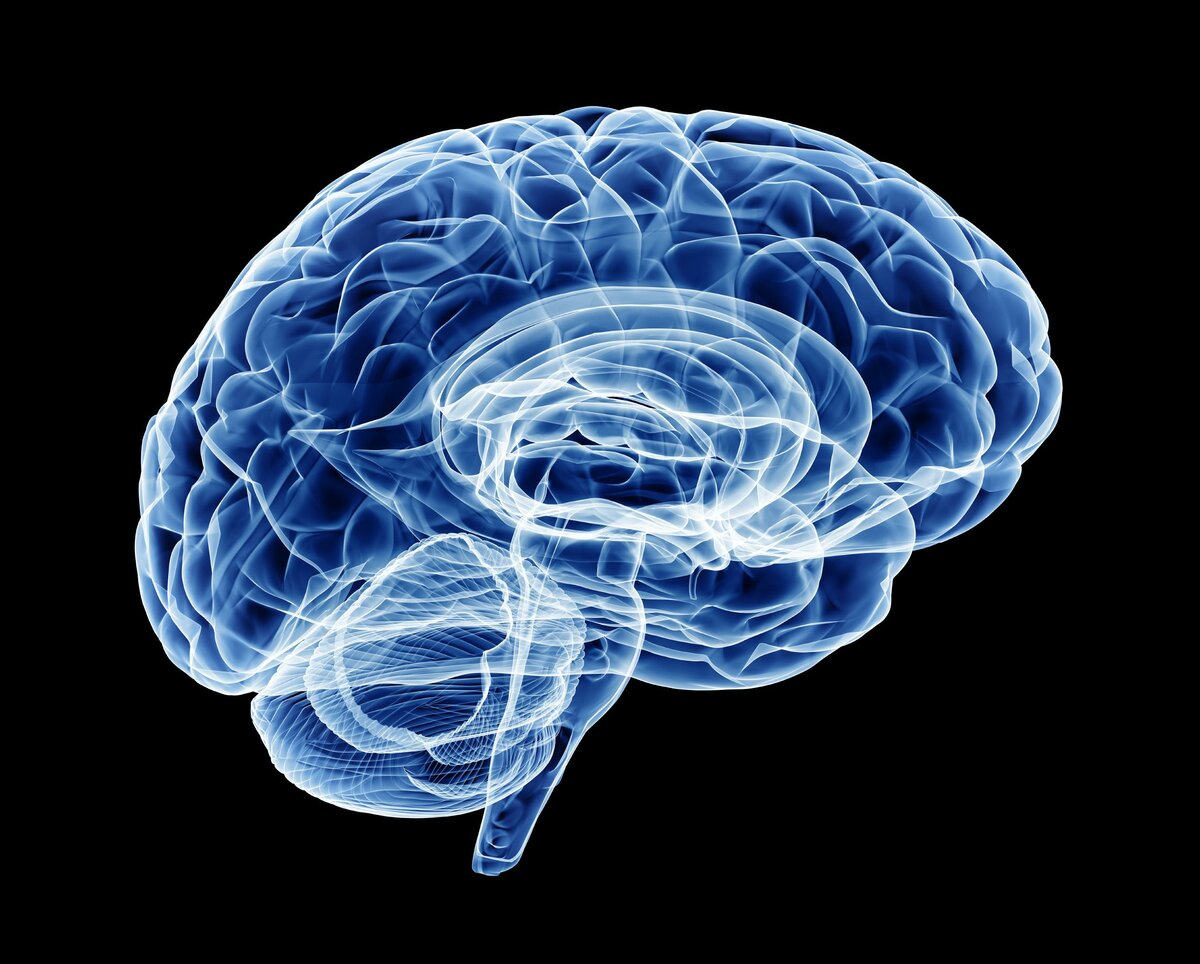 Исследователи обнаружили молекулу, критически важную для функционального омоложения мозга
