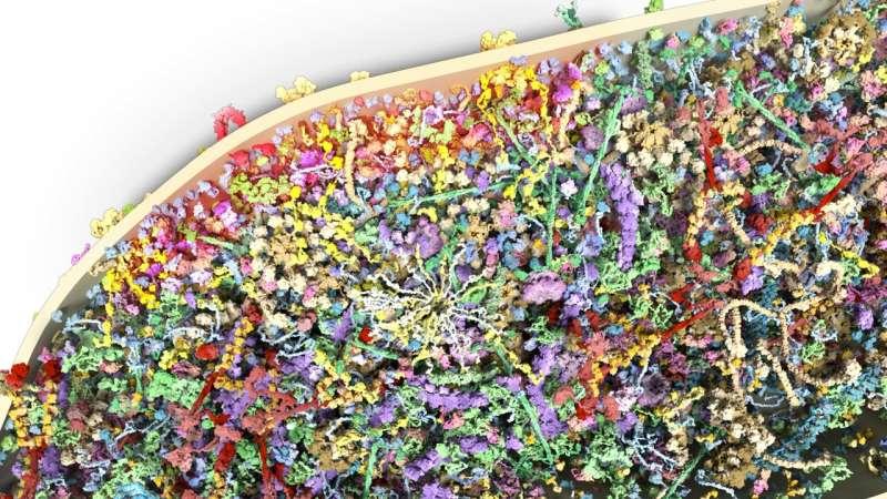 Масштабное исследование белкового состава дендритных шипов