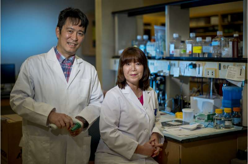 Медный переносчик - потенциальная новая мишень для лечения сердечно-сосудистых заболеваний