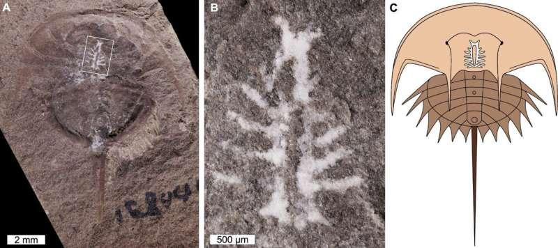 Расшифровка секретов мозга возрастом 310 миллионов лет