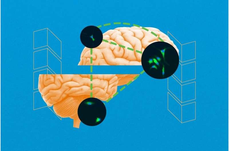 Обнаружение неизвестного процесса восстановления мозга может привести к новым методам лечения эпилепсии