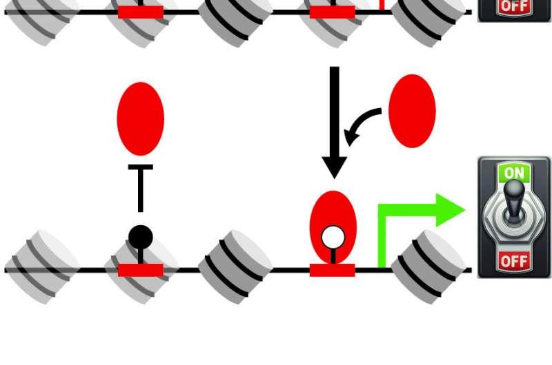 """Исследователи определили отсутствующий """"переключатель"""", который контролирует важные гены"""