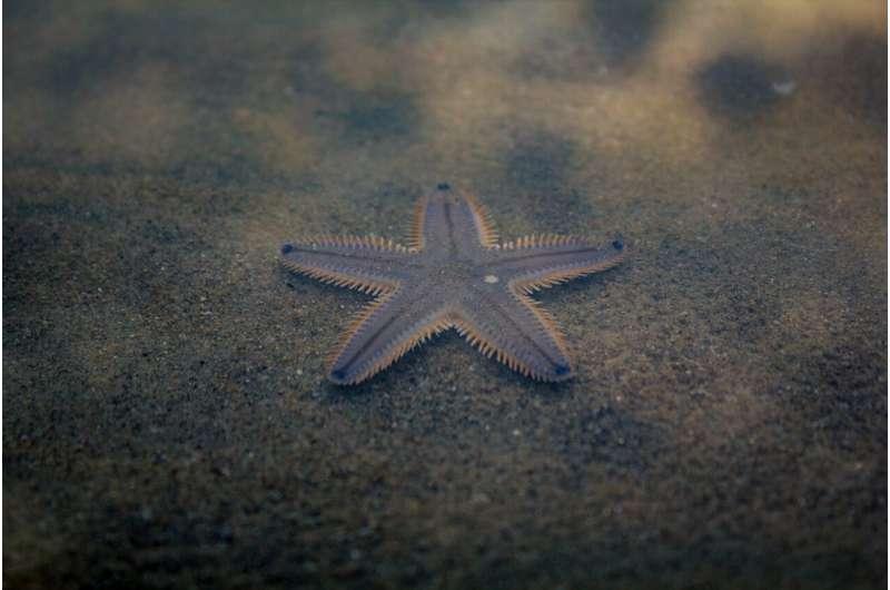 Огромное морское дно юрского периода обнаружено в карьере Котсуолдс