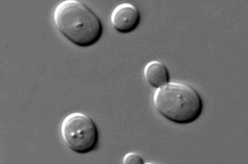 Неожиданная пластичность протеома в ответ на постоянное повышение температуры