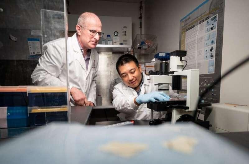 Новое понимание механизма красных кровяных телец предлагает ключи к лечению серповидно-клеточной анемии