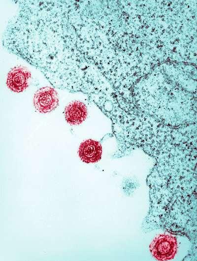 Неожиданное разнообразие вирусных последовательностей в геноме человека