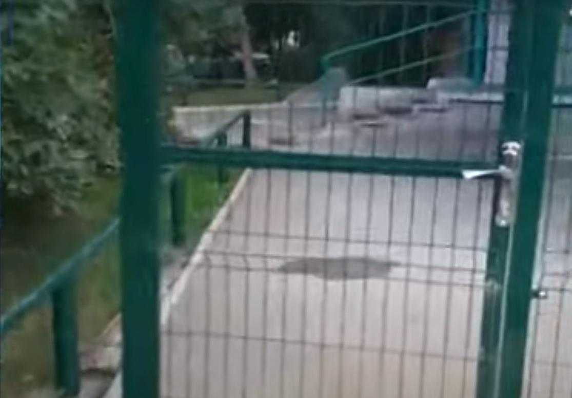 В Новосибирске женщина установила во дворе дома двухметровый забор